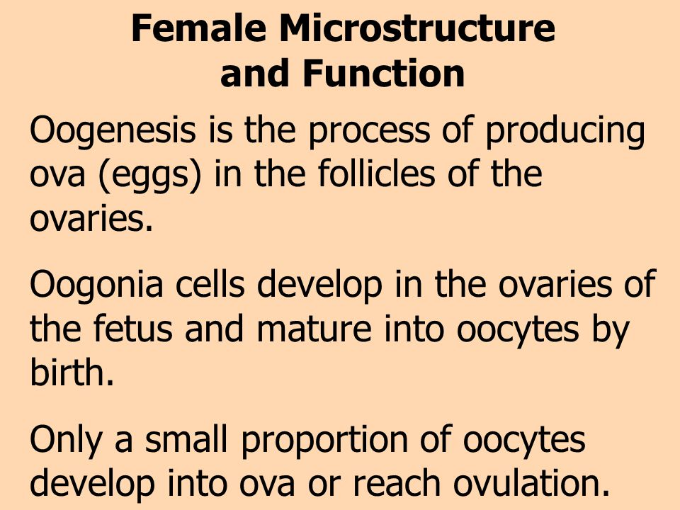 Female Microstructure and Function Oogenesis is the process of producing ova (eggs) in the follicles of the ovaries. Oogonia cells develop in the ovar