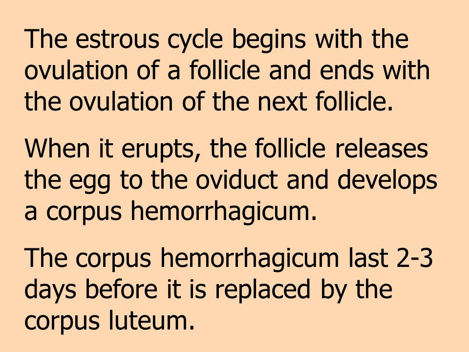 The estrous cycle begins with the ovulation of a follicle and ends with the ovulation of the next follicle. When it erupts, the follicle releases the