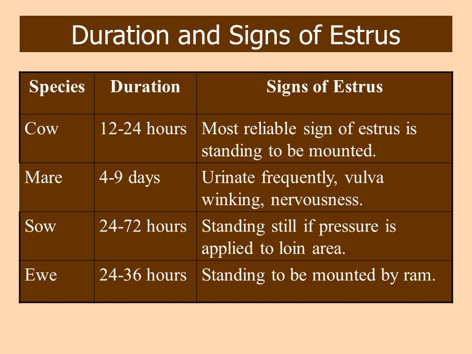 Duration and Signs of Estrus SpeciesDurationSigns of Estrus Cow12-24 hoursMost reliable sign of estrus is standing to be mounted. Mare4-9 daysUrinate