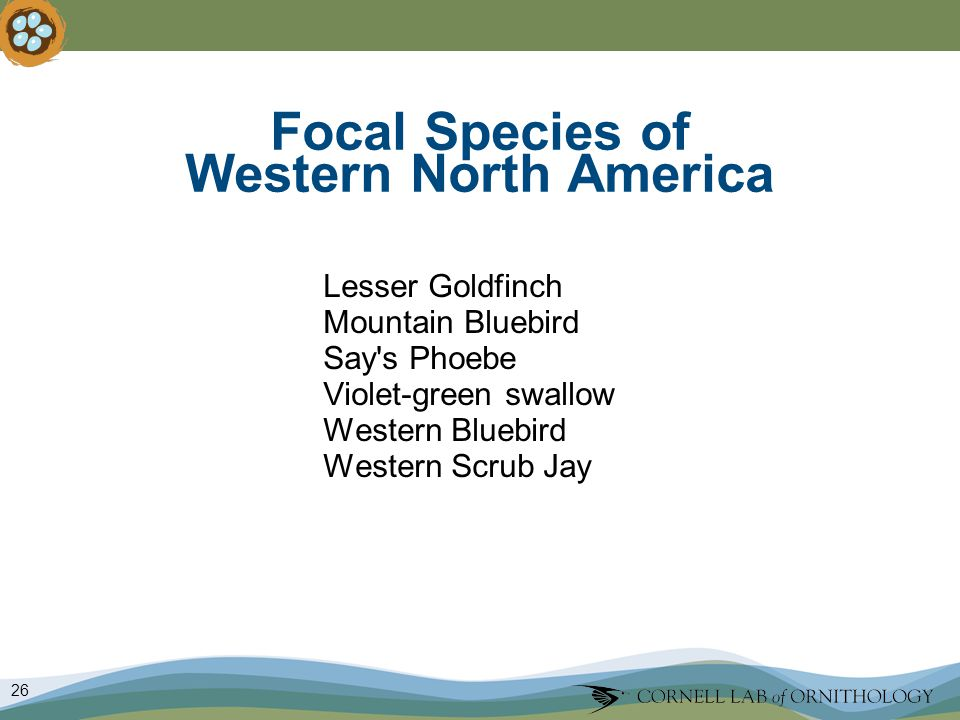 26 Focal Species of Western North America Lesser Goldfinch Mountain Bluebird Say s Phoebe Violet-green swallow Western Bluebird Western Scrub Jay
