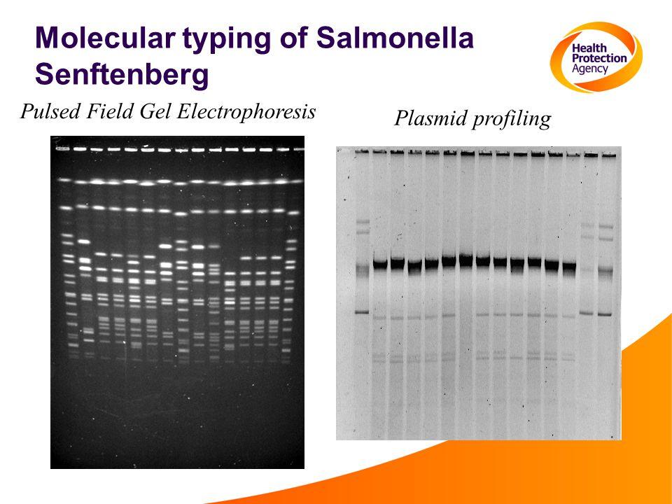 Molecular typing of Salmonella Senftenberg Pulsed Field Gel Electrophoresis Plasmid profiling