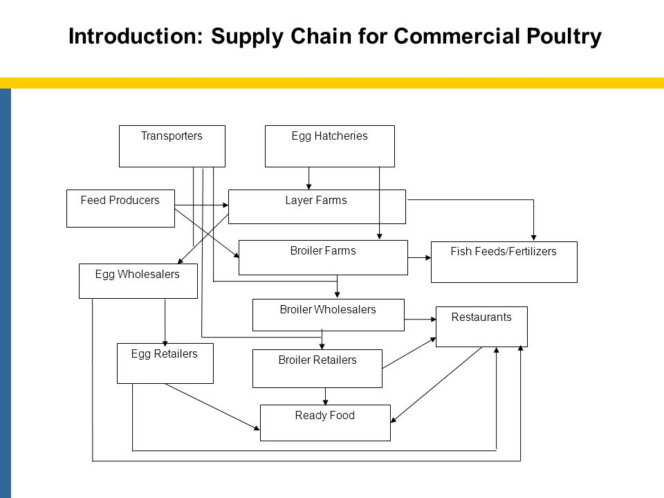 Rural Assembly Markets Rural Wholesalers Restaurants Urban Wholesalers Beparis/Farias Sub-urban Retailers Ready Food Rural Households Urban Retailers Transporters Introduction (contd.): Supply Chain for Backyard Chickens