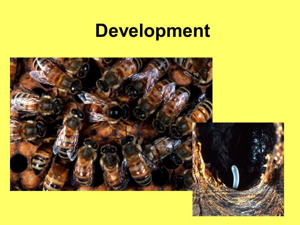 Development M. Frazier