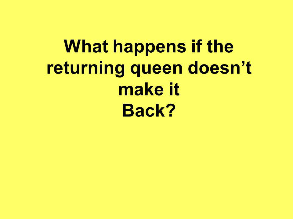What happens if the returning queen doesnt make it Back?