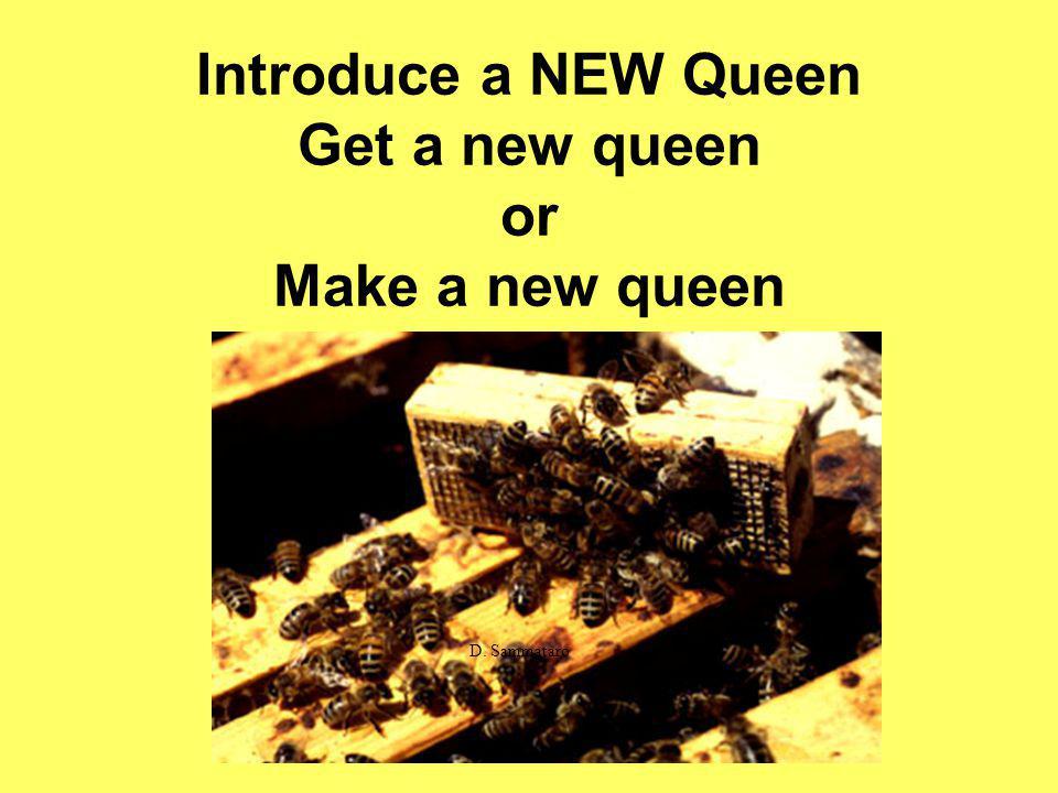 Introduce a NEW Queen Get a new queen or Make a new queen D. Sammataro