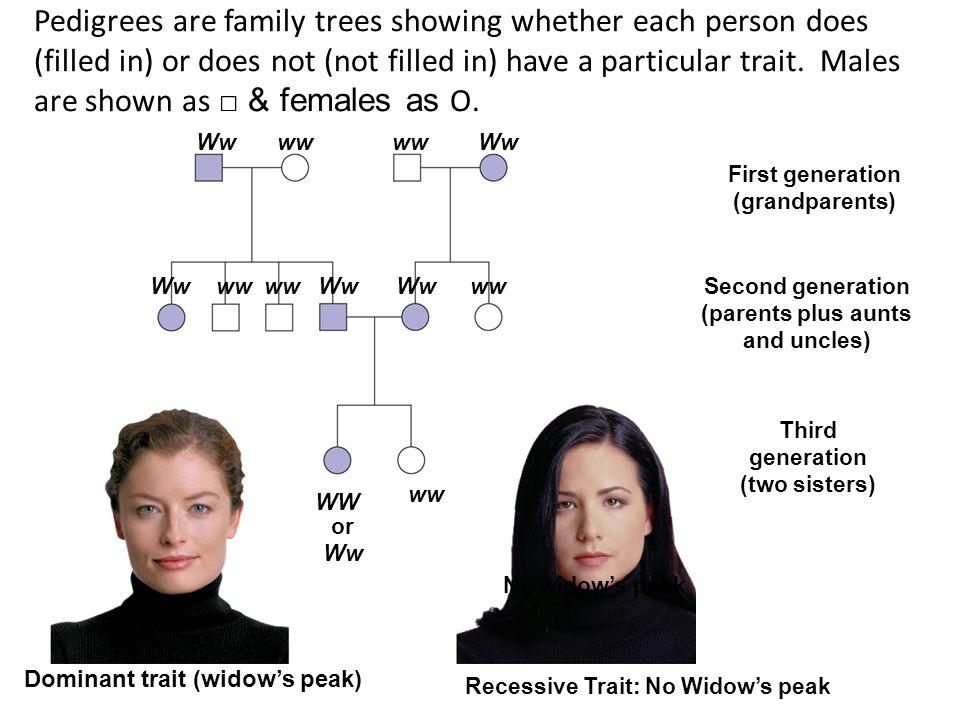 Wwww Ww wwWwww Ww WW ww or Ww No widows peak Third generation (two sisters) Recessive Trait: No Widows peak Second generation (parents plus aunts and