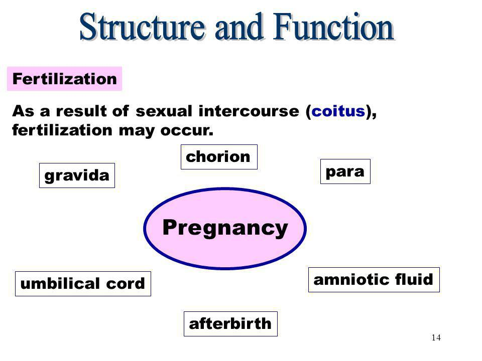 13 Preventing Fertilization At the point of ovulation, fertilization can be prevented with contraception.