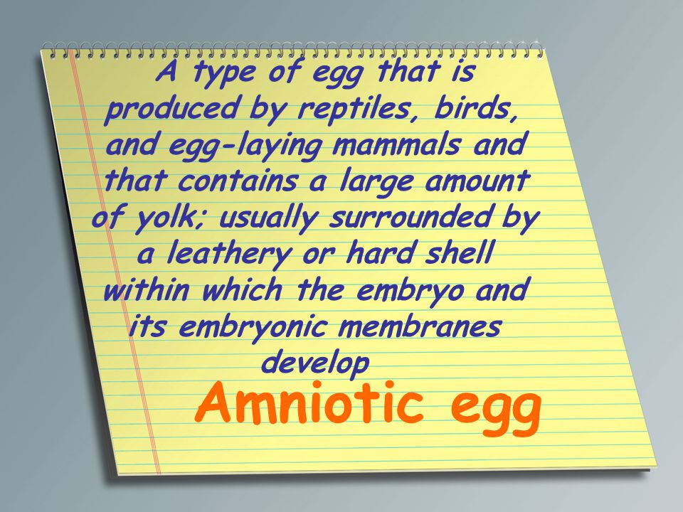 A type of egg that is produced by reptiles, birds, and egg-laying mammals and that contains a large amount of yolk; usually surrounded by a leathery or hard shell within which the embryo and its embryonic membranes develop Amniotic egg