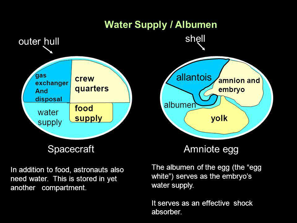 outer hull Spacecraft gas exchanger And disposal crew quarters food supply shell Amniote egg amnion and embryo allantois yolk allantois albumen water