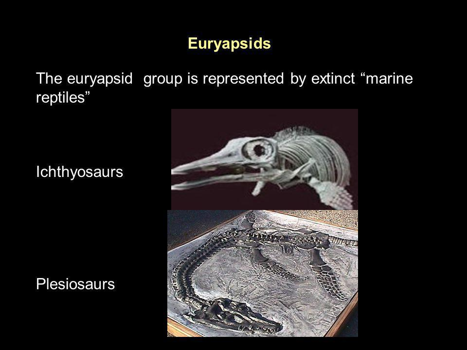 Euryapsids The euryapsid group is represented by extinct marine reptiles Ichthyosaurs Plesiosaurs