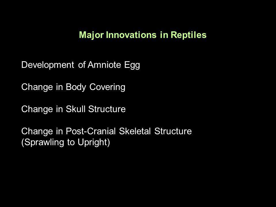 Major Innovations in Reptiles Development of Amniote Egg Change in Body Covering Change in Skull Structure Change in Post-Cranial Skeletal Structure (