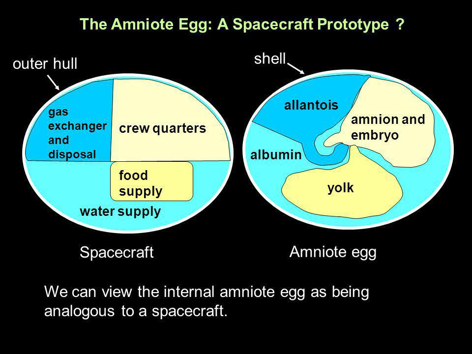 Spacecraft gas exchanger and disposal crew quarters food supply water supply outer hull The Amniote Egg: A Spacecraft Prototype ? We can view the inte