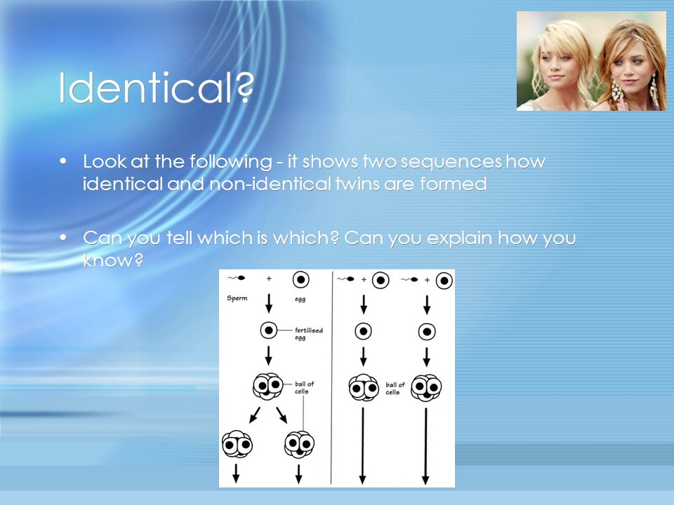 Identical? Look at the following - it shows two sequences how identical and non-identical twins are formed Can you tell which is which? Can you explai