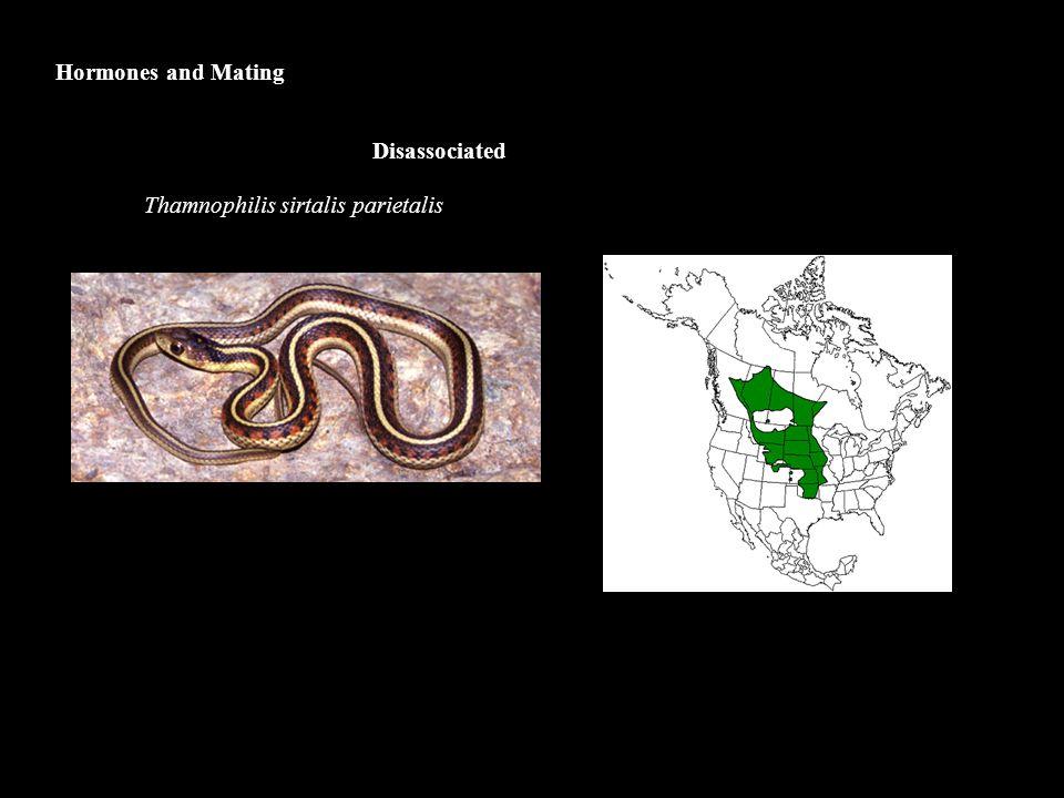 Hormones and Mating Disassociated Thamnophilis sirtalis parietalis