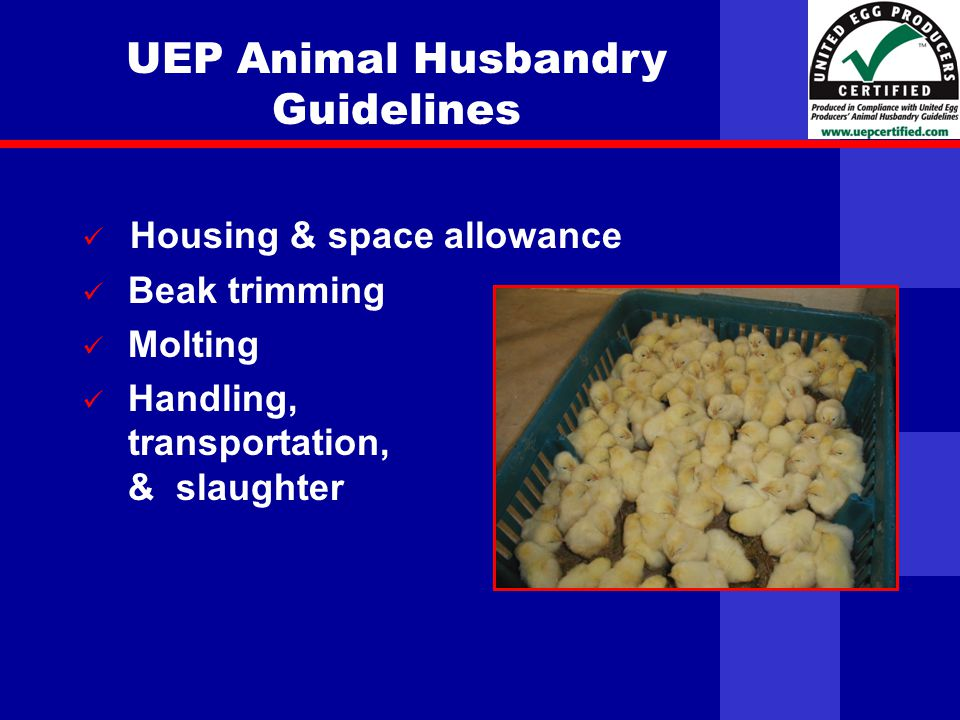 United Egg Producers UEP Animal Husbandry Guidelines Housing & space allowance Beak trimming Molting Handling, transportation, & slaughter