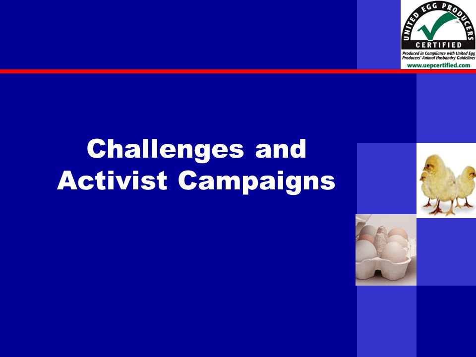 United Egg Producers Challenges and Activist Campaigns