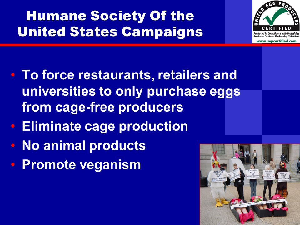 United Egg Producers Humane Society Of the United States Campaigns To force restaurants, retailers and universities to only purchase eggs from cage-free producers Eliminate cage production No animal products Promote veganism