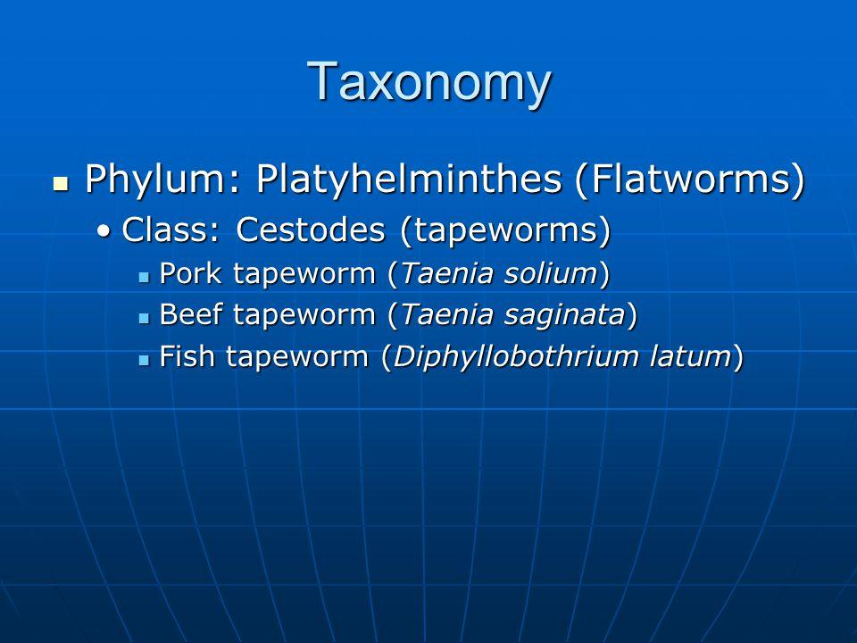 Taxonomy Phylum: Platyhelminthes (Flatworms) Phylum: Platyhelminthes (Flatworms) Class: Cestodes (tapeworms)Class: Cestodes (tapeworms) Pork tapeworm