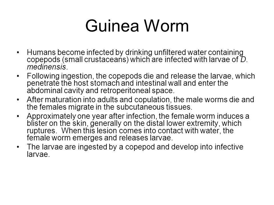 Guinea Worm Humans become infected by drinking unfiltered water containing copepods (small crustaceans) which are infected with larvae of D. medinensi