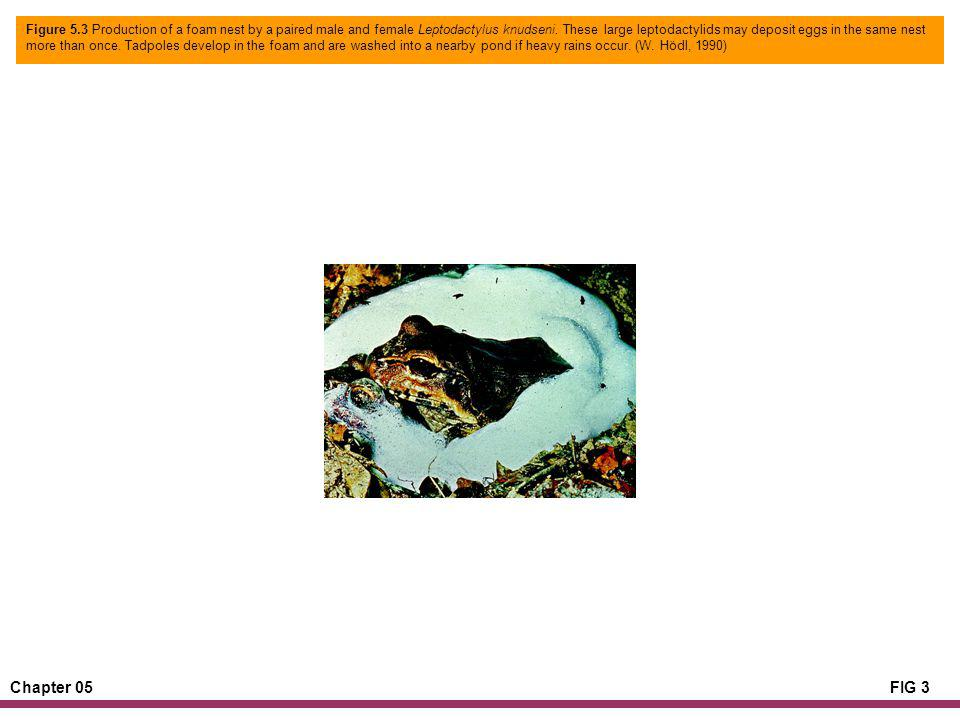 Chapter 05FIG 3 Figure 5.3 Production of a foam nest by a paired male and female Leptodactylus knudseni.