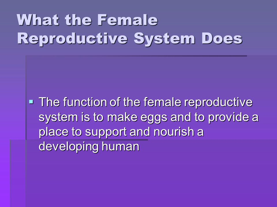What the Female Reproductive System Does The function of the female reproductive system is to make eggs and to provide a place to support and nourish a developing human The function of the female reproductive system is to make eggs and to provide a place to support and nourish a developing human