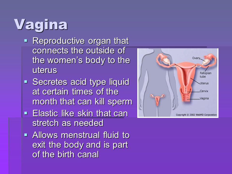 Vagina Reproductive organ that connects the outside of the womens body to the uterus Reproductive organ that connects the outside of the womens body to the uterus Secretes acid type liquid at certain times of the month that can kill sperm Secretes acid type liquid at certain times of the month that can kill sperm Elastic like skin that can stretch as needed Elastic like skin that can stretch as needed Allows menstrual fluid to exit the body and is part of the birth canal Allows menstrual fluid to exit the body and is part of the birth canal