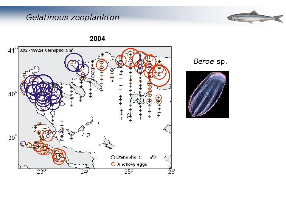 Gelatinous zooplankton Beroe sp. 2004