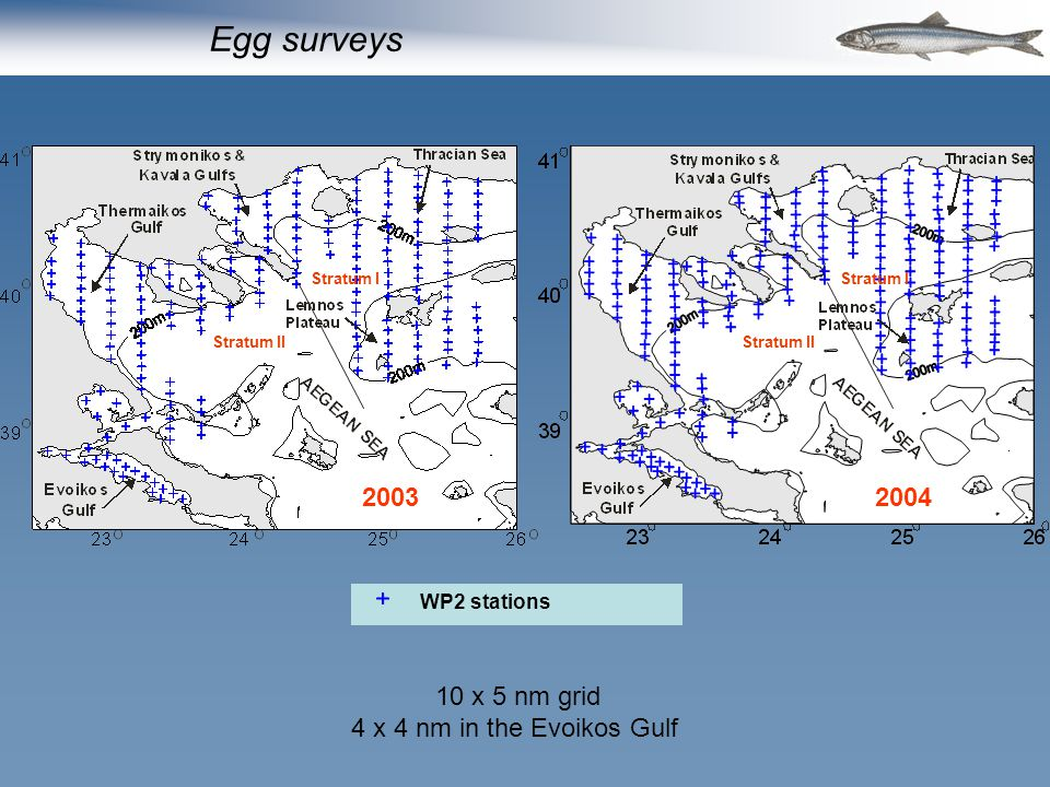 WP2 stations 20042003 Stratum I Stratum II Stratum I Stratum II Egg surveys 10 x 5 nm grid 4 x 4 nm in the Evoikos Gulf