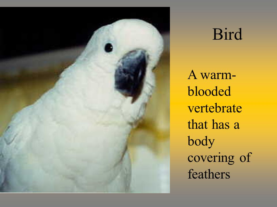 Bird A warm- blooded vertebrate that has a body covering of feathers