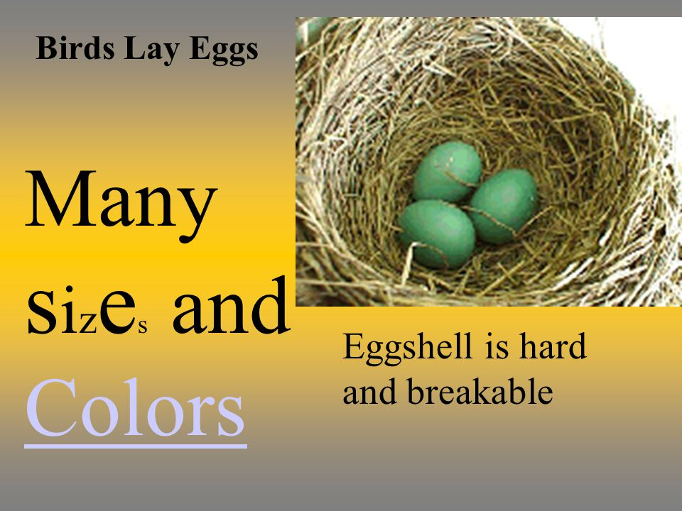 Birds Lay Eggs Many s i z e s and Colors Colors Eggshell is hard and breakable