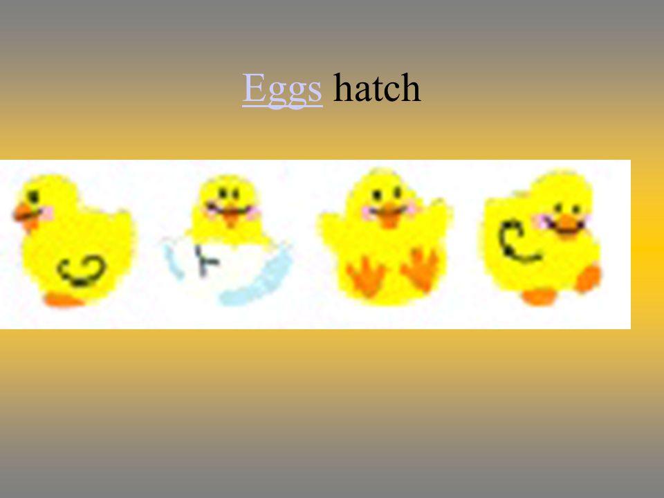 EggsEggs hatch