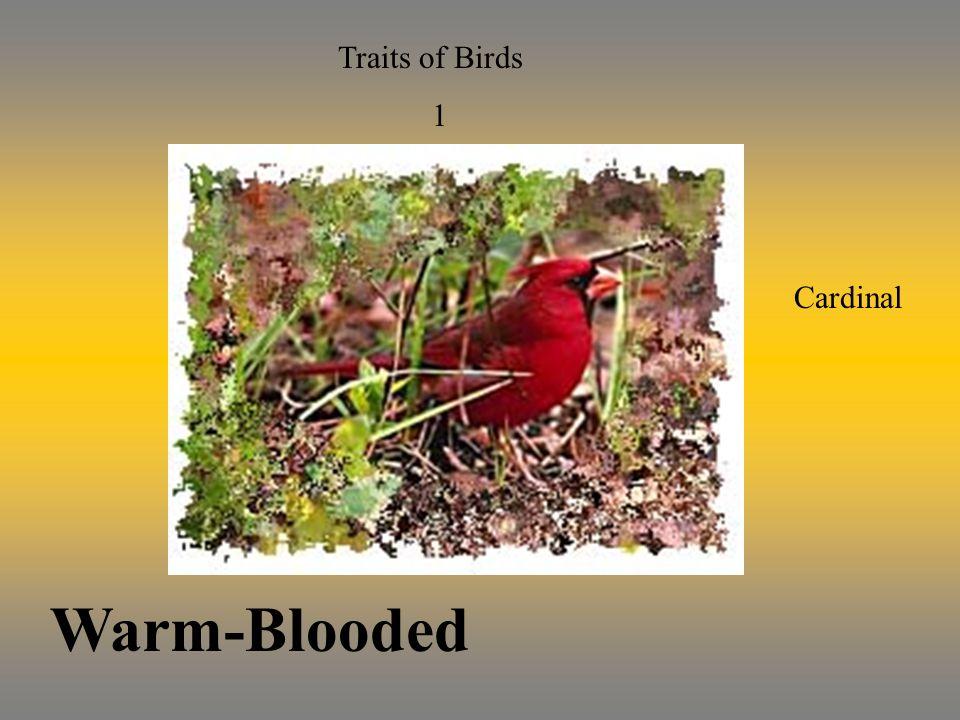 Traits of Birds 2 Vertebrate Has a Backbone