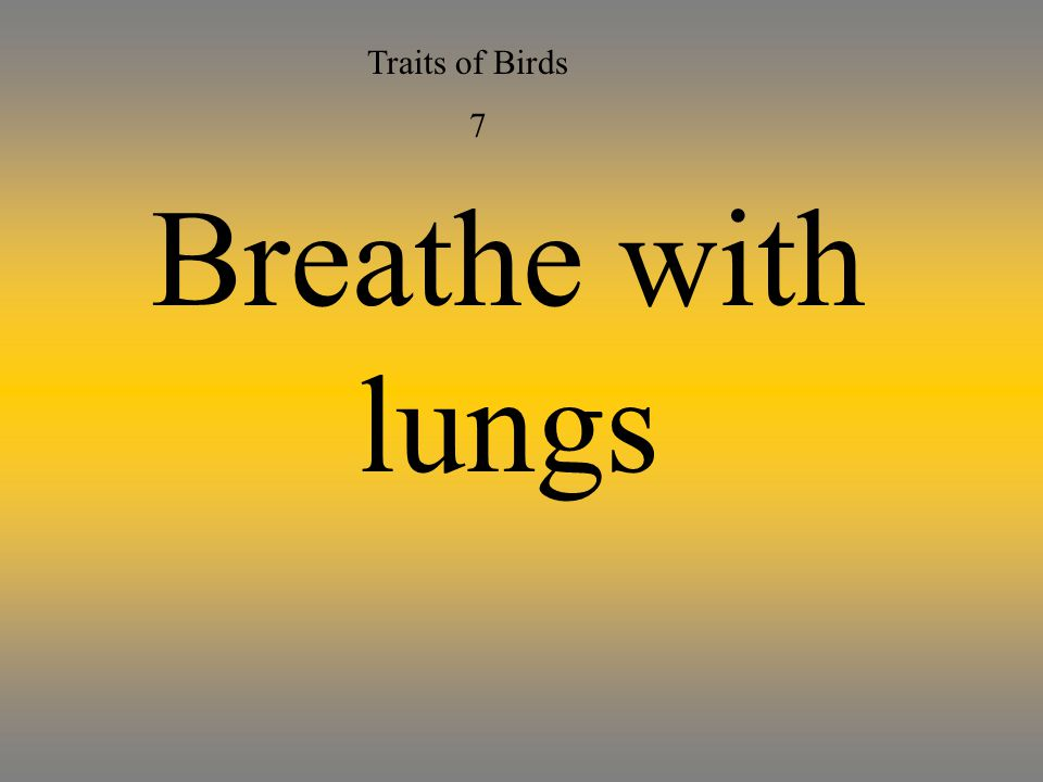 Traits of Birds 7 Breathe with lungs