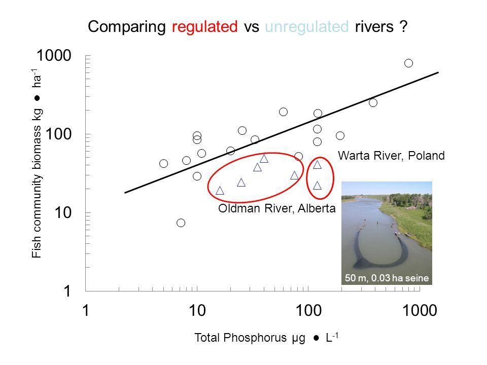 Total Phosphorus µg L -1 Fish community biomass kg ha -1 Oldman River, Alberta Warta River, Poland Comparing regulated vs unregulated rivers ? 50 m, 0