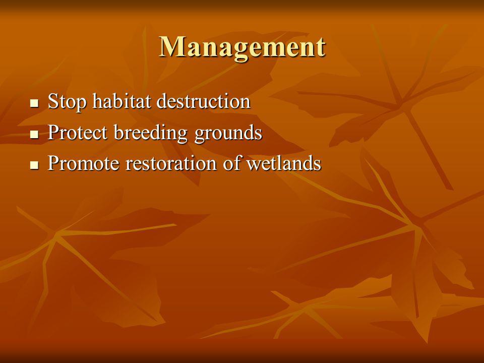 Management Stop habitat destruction Stop habitat destruction Protect breeding grounds Protect breeding grounds Promote restoration of wetlands Promote restoration of wetlands