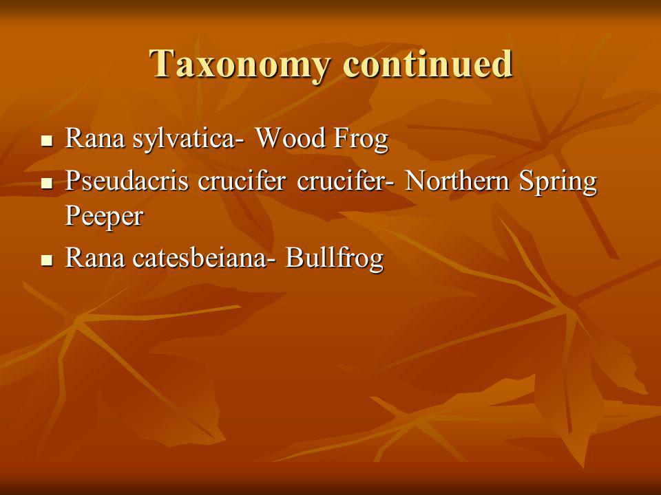 Northern Spring Peeper Description Description 1 in.