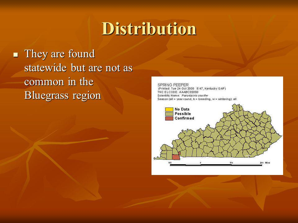 Distribution They are found statewide but are not as common in the Bluegrass region They are found statewide but are not as common in the Bluegrass region
