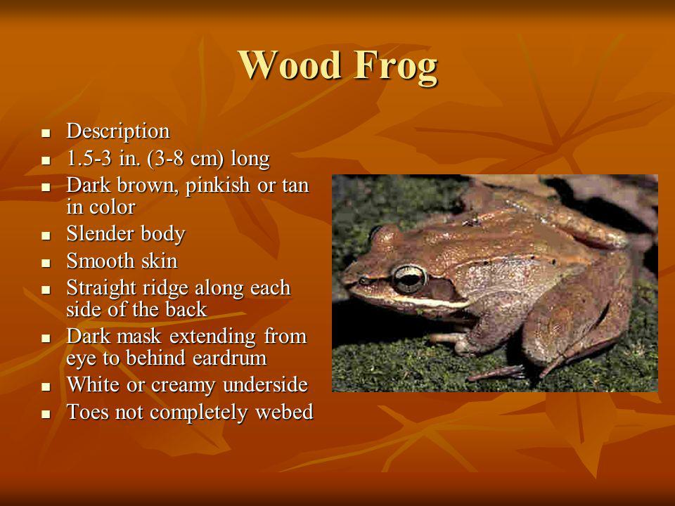 Ecology Habitat- Wooded areas, ponds, forested wetlands and temporary water holes Habitat- Wooded areas, ponds, forested wetlands and temporary water holes Diet consist of: Diet consist of:Insects Small invertebrates