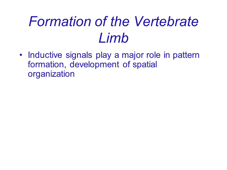 Formation of the Vertebrate Limb Inductive signals play a major role in pattern formation, development of spatial organization