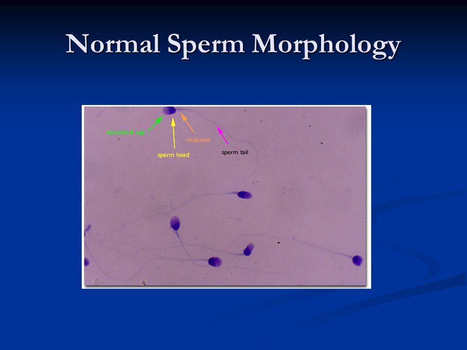 Normal Sperm Morphology