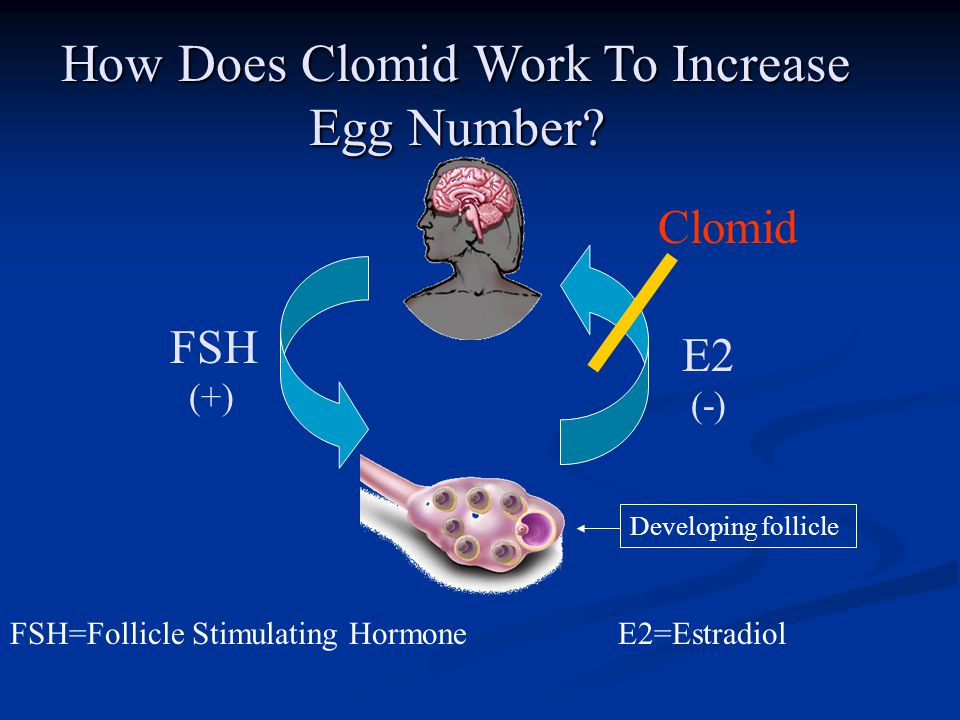 FSH (+) FSH=Follicle Stimulating Hormone How Does Clomid Work To Increase Egg Number? E2 (-) E2=Estradiol Developing follicle Clomid