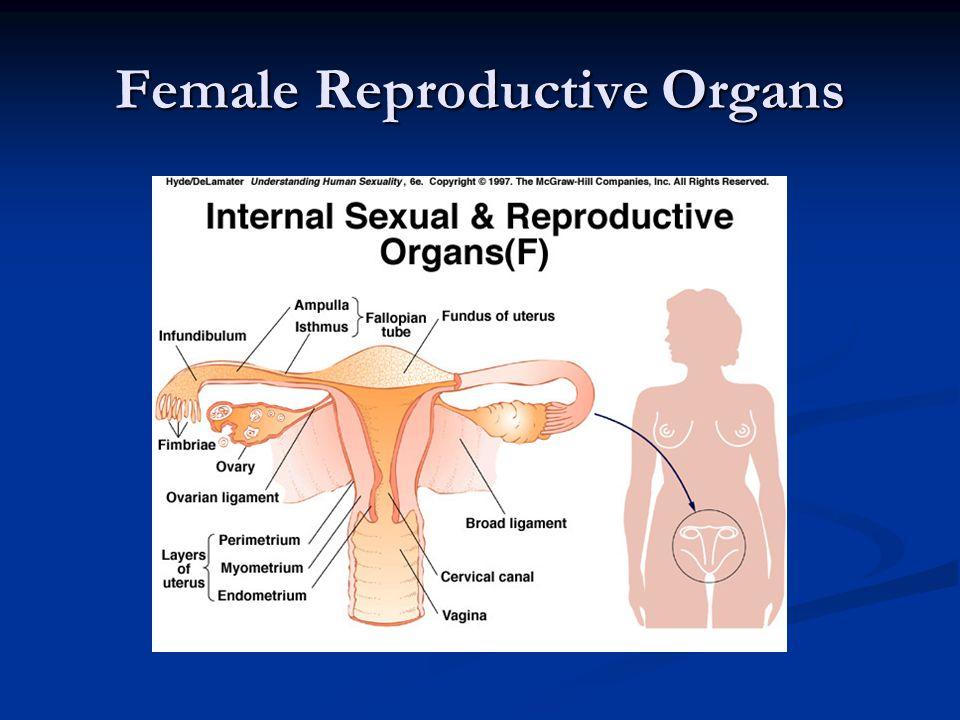Ovary – Premature Ovarian Failure Menopause prior to age 40 Menopause prior to age 40 Decreased Estrogen Decreased Estrogen Increased FSH Increased FSH Causes Causes Autoimmune Autoimmune Genetic Genetic Idiopathic Idiopathic 1-2% pregnancy rate 1-2% pregnancy rate