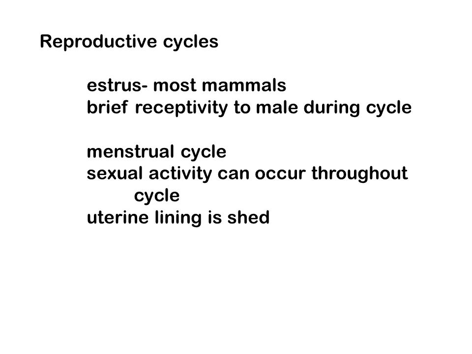 Reproductive cycles estrus- most mammals brief receptivity to male during cycle menstrual cycle sexual activity can occur throughout cycle uterine lin