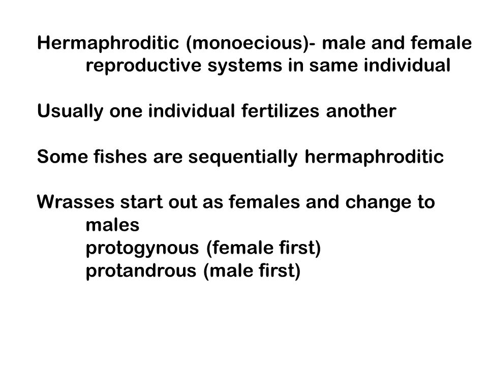 Hermaphroditic (monoecious)- male and female reproductive systems in same individual Usually one individual fertilizes another Some fishes are sequent