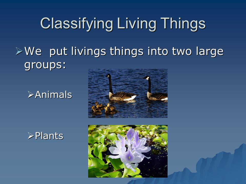 Classifying Living Things We put livings things into two large groups: We put livings things into two large groups: Animals Animals Plants Plants
