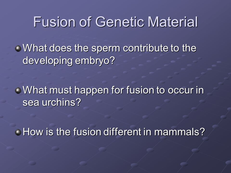 Fusion of Genetic Material What does the sperm contribute to the developing embryo? What must happen for fusion to occur in sea urchins? How is the fu