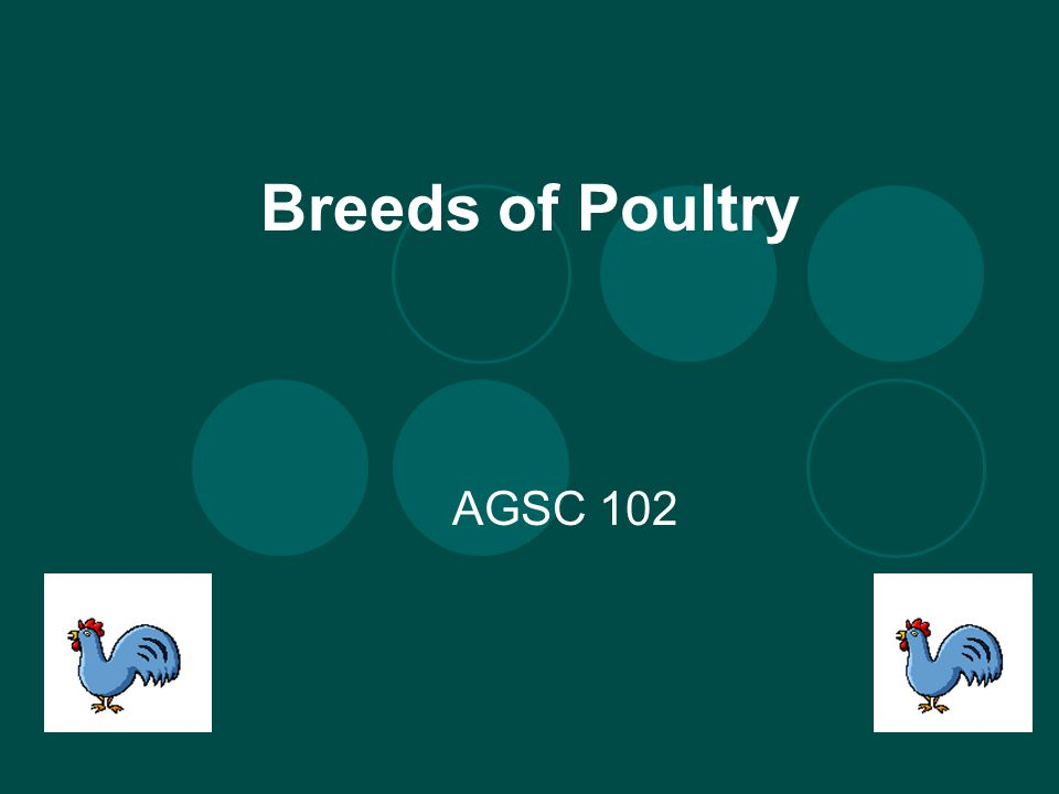Breeds of Poultry AGSC 102