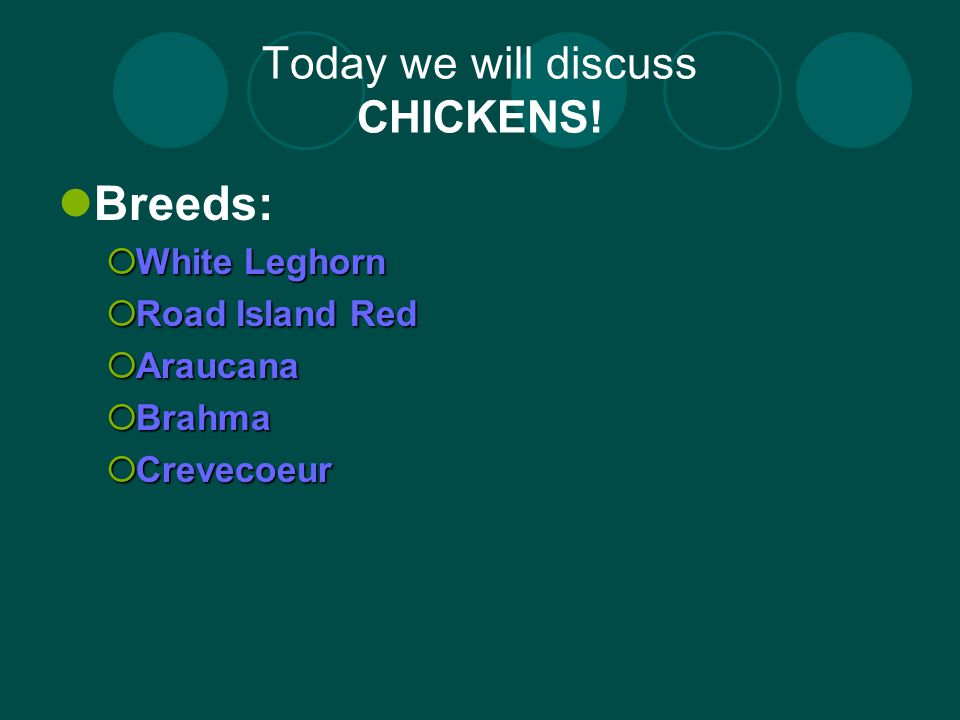 White Leghorn: Standard Weights: Cock-6 pounds; Hen- 4-1/2 pounds; Cockerel -5 pounds; Pullet-4 pounds.