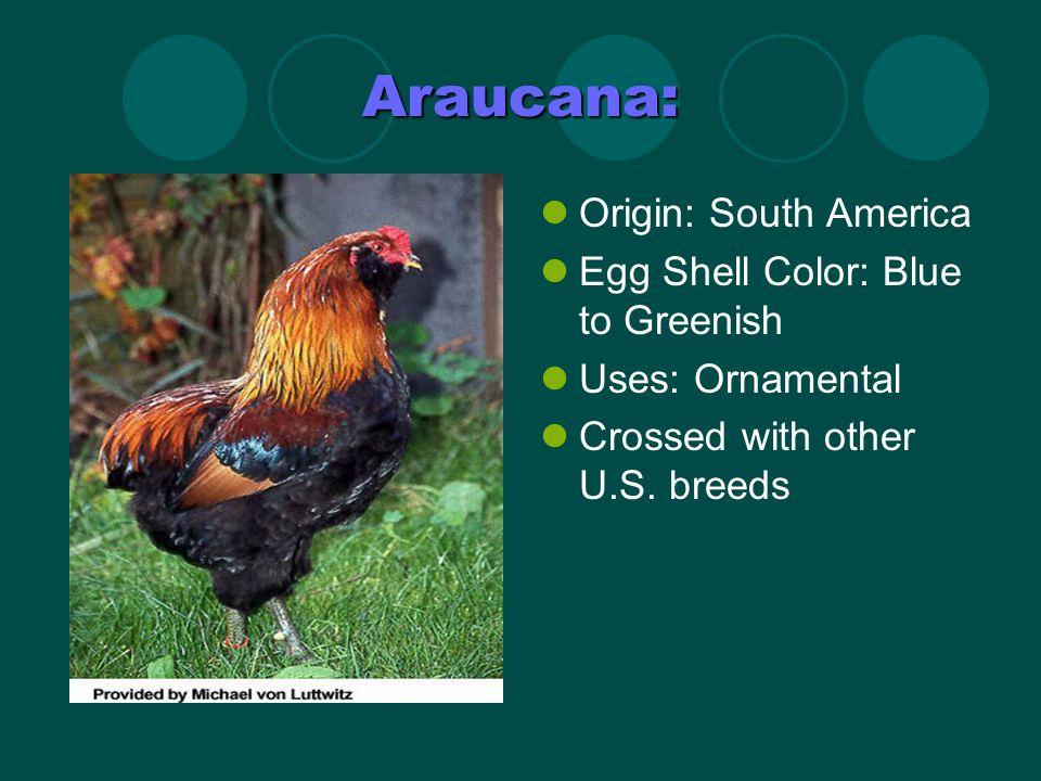 Brahma: Standard Weights (Light): Cock-12 pounds; Hen-9- 1/2 pounds; Cockerel-10 pounds; Pullet-8 pounds.