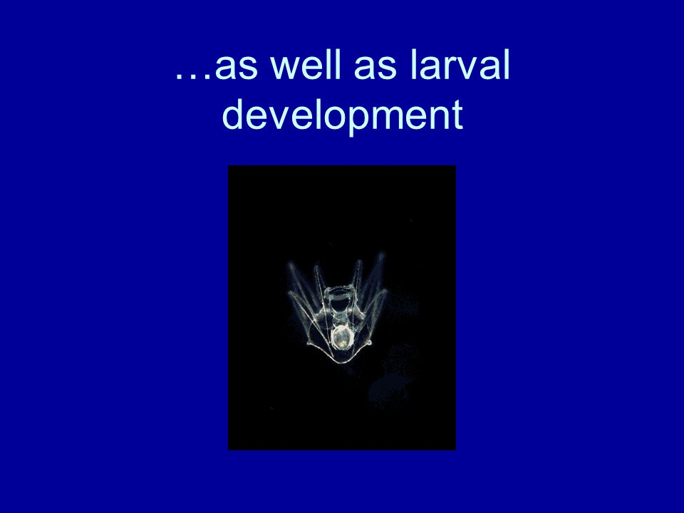 …as well as larval development